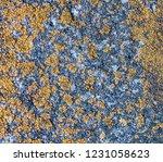natural grunge texture | Shutterstock . vector #1231058623