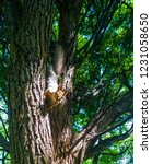 squirrel on tree | Shutterstock . vector #1231058650