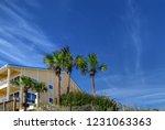 destin beach florida modern... | Shutterstock . vector #1231063363