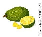 jackfruit isolated on white... | Shutterstock .eps vector #1231074013