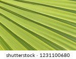 sugar palm leaf texture... | Shutterstock . vector #1231100680