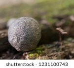 shaman stone from the north rim ... | Shutterstock . vector #1231100743