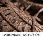 abstract view of the fern plant.... | Shutterstock . vector #1231175476