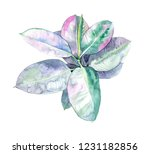 rubber fig watercolor... | Shutterstock . vector #1231182856