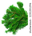 fir branch isolated on white... | Shutterstock . vector #1231201396
