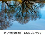 autumnal nature mirroring in a...   Shutterstock . vector #1231227919