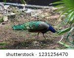 mexico  yucatan peninsula  ... | Shutterstock . vector #1231256470