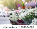 nightingale daisy flower in... | Shutterstock . vector #1231324606