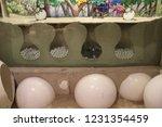 mexico  yucatan peninsula  ... | Shutterstock . vector #1231354459
