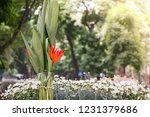 birds of paradise and... | Shutterstock . vector #1231379686