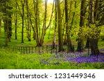 Spring On Hampstead Heath  ...