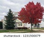 dearborn  michigan november 8 ... | Shutterstock . vector #1231500079