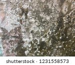 abstract texture background     ... | Shutterstock . vector #1231558573