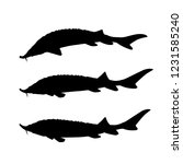 set of silhouettes of sturgeon... | Shutterstock .eps vector #1231585240