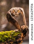 Small photo of Eurasian Eagle Owl (Bubo bubo), flying bird with open wings with the autumn forest in the background, animal in the nature habitat.