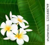 plumeria. exotic flower.... | Shutterstock .eps vector #1231688749