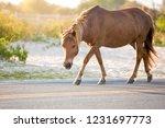 a wild pony  equus caballus ... | Shutterstock . vector #1231697773