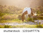a wild pony  equus caballus ... | Shutterstock . vector #1231697776