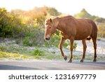 a wild pony  equus caballus ... | Shutterstock . vector #1231697779