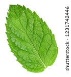 mint leaves isolated on white.... | Shutterstock . vector #1231742446