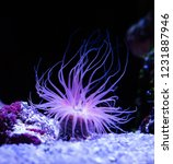 Beautiful Sea Anemone Lighting...