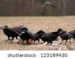raven | Shutterstock . vector #123189430