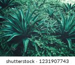 close up of green agave | Shutterstock . vector #1231907743