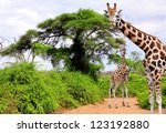 giraffes in kruger park south... | Shutterstock . vector #123192880