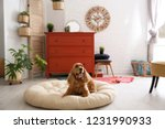 Stock photo adorable dog on pet bed in stylish room interior 1231990933