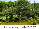 green japanese garden on... | Shutterstock . vector #1232010919