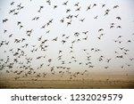 A Paradise For Migratory Birds