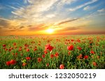 poppy fields sunset | Shutterstock . vector #1232050219