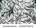 fish sprats at the fish market. ... | Shutterstock . vector #1232070673