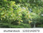 close up of green leaf with... | Shutterstock . vector #1232142073