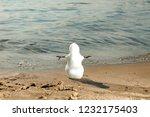 christmas snow snowman at sandy ... | Shutterstock . vector #1232175403