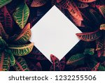 beautiful leaves with white... | Shutterstock . vector #1232255506