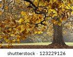 Beautiful Plane Tree In Autumn