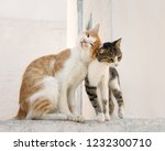 two cute companioned cats side... | Shutterstock . vector #1232300710