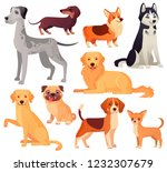 Stock vector dogs pets character labrador dog golden retriever and husky sitting pug chihuahua and dachshund 1232307679