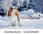 Spaniel Sits On A Background O...
