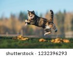 Stock photo funny cat playing in autumn 1232396293