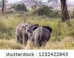 elephants fighting on the... | Shutterstock . vector #1232422843