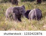 elephants fighting on the... | Shutterstock . vector #1232422876