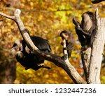 beard ape in german zoo | Shutterstock . vector #1232447236