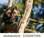 beard ape in german zoo | Shutterstock . vector #1232447290