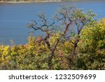 beautiful autumn landscape of... | Shutterstock . vector #1232509699