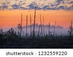 foggy morning at yelnya swamp ... | Shutterstock . vector #1232559220