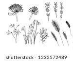 set of botanical flowers.... | Shutterstock . vector #1232572489