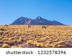 atacama desert  chile  andes ... | Shutterstock . vector #1232578396