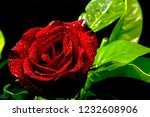 roses are used to give on... | Shutterstock . vector #1232608906